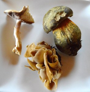 Edible Mushrooms sm