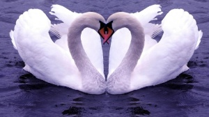 Swan-Lake-Couple-Heart-Shaped-Photos-750x422