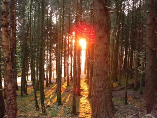 sun-in-trees-sm